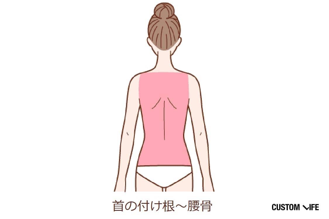首の付け根~腰骨