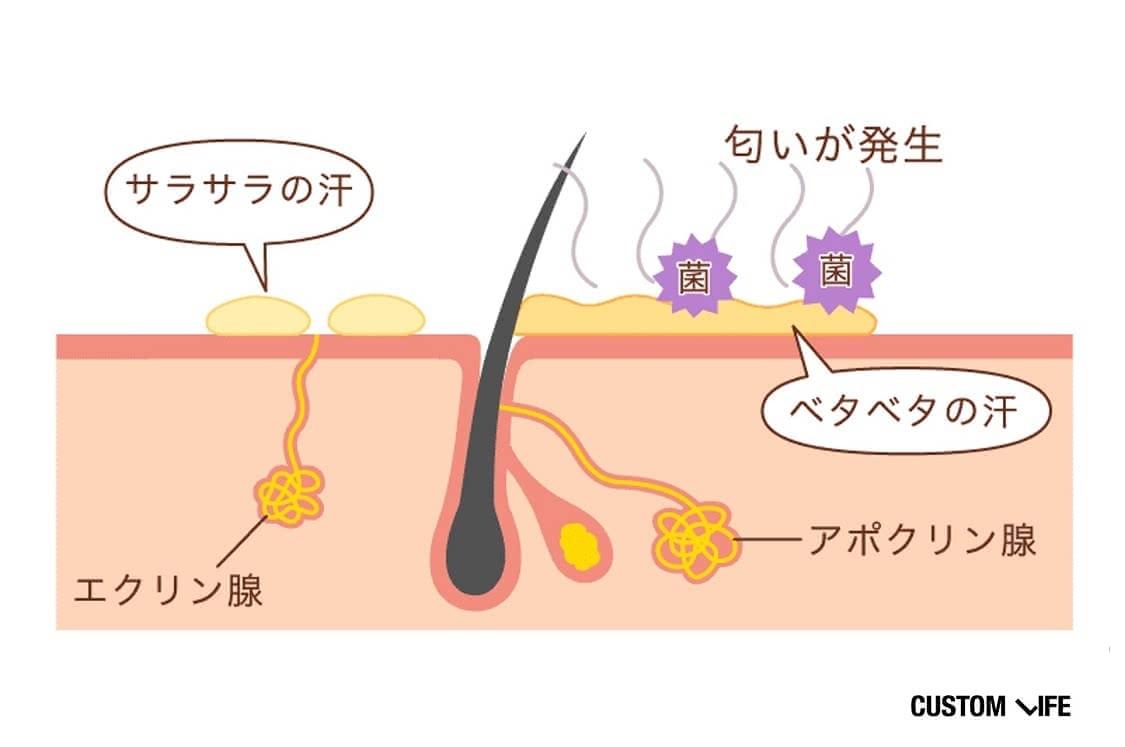 アポクリン腺から出るベタベタの汗は匂いが発生する